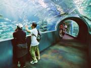 Fish Bowl -  Tunnel Display 3