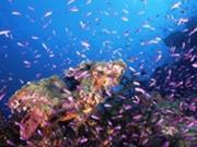 漁礁(Acページに使い中)