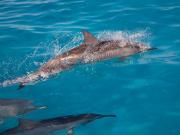 lahaina_cruise_dolphin01