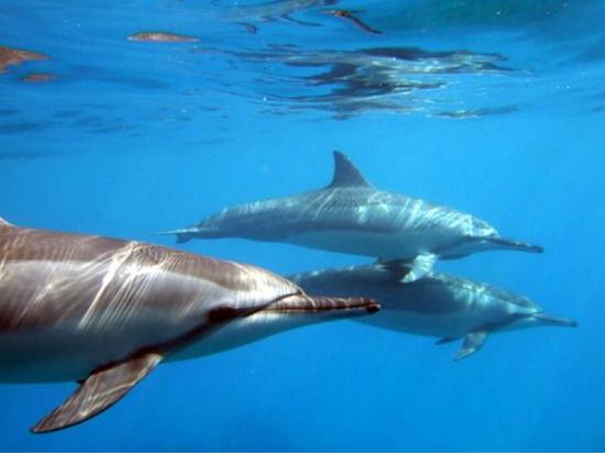 Dolphin Swim Adventure Big Island