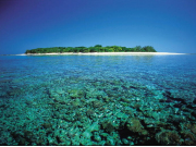 Lady_Musgrave_Coral__Island