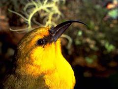 bird-watching01