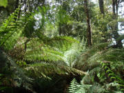 Bunyip%20Tours%20-%20Wislons%20Promontory