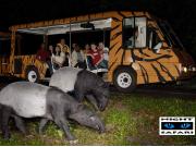 Night Safari - Tram Ride