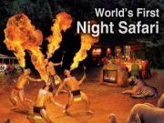 night safari - コピー