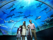 MLP-S.E.A.-Aquarium-Shark-Seas