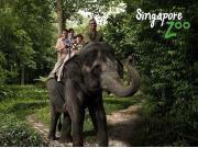 Elephant ride_1