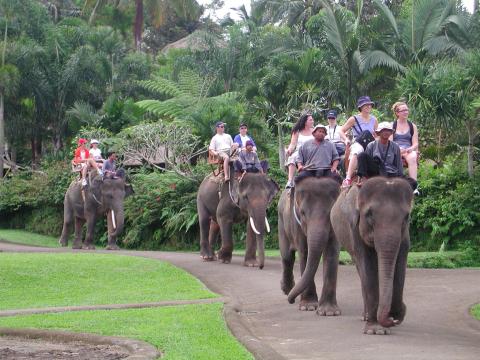 象乗り/動物