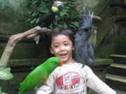 Bali zoo4