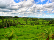 E - UNESCO recognized terraced rice field at Jatiluwih