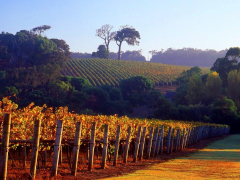 Cape-Lodge_Margaret-River_Vineyards-573