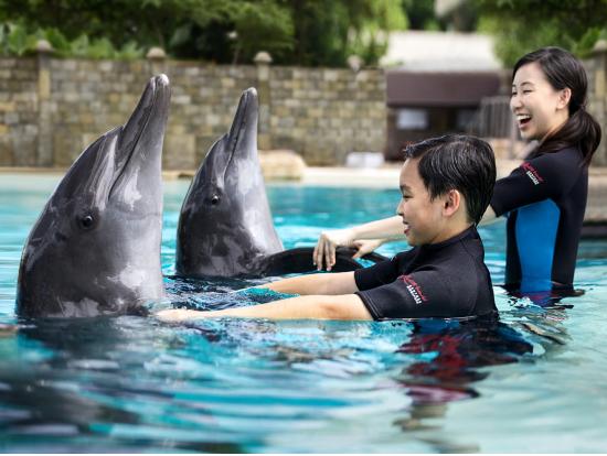 セントーサ島でイルカと触れ合う!ドルフィンアイランドツアー | シンガポールの観光・オプショナルツアー専門 VELTRA(ベルトラ)セントーサ島でイルカと触れ合う!ドルフィンアイランドツアー | シンガポールの観光・オプショナルツアー専門 VELTRA(ベルトラ)
