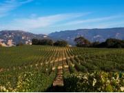 ケンゾーのエステイト所有の敷地に広がるワイン畑