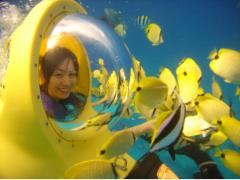 ハワイ 水中スクーターBOB - シーボブで海底散歩&シュノーケルクルーズ