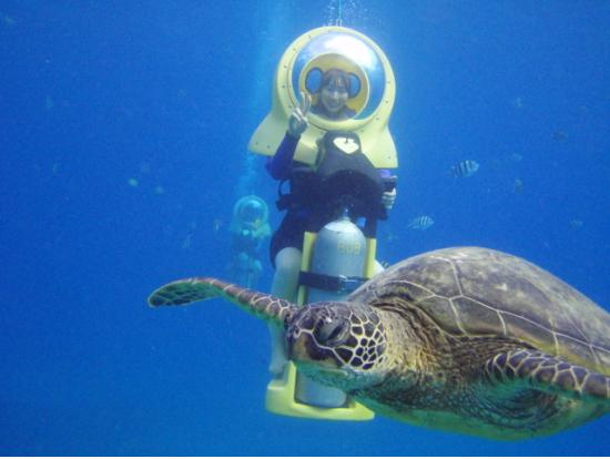 Bob 39 S Underwater Scooter Adventure Oahu Tours