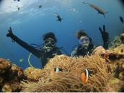 Divers meeting cute clownfish