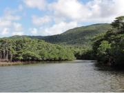 Cruising down a mangrove river in Okinawa