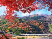 もみじ_渡月橋_嵐山