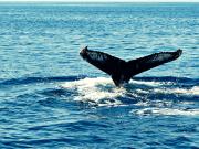 oceansports_ww01