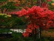 西明寺の紅葉2