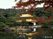 Golden Kinkakuji Temple in Autumn