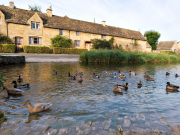 Cotswolds Ducks iStock