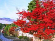嵐山_嵯峨野_京の紅葉