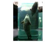 旭山動物園6