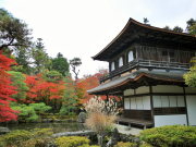 Ginkakuji temple in the autumn