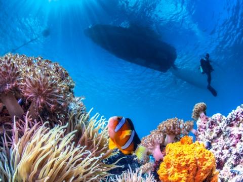 Mactan Scuba Diving Experience