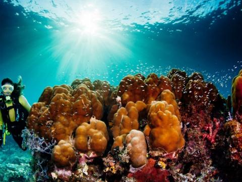 Mactan Scuba Diving