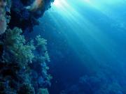 diving_1770193