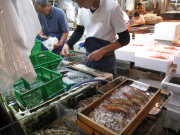 Fresh shrimp and prawns at Tsukiji