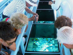 guided-tour-in-glass-boat-bottom-in-bora-bora