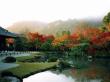 Fall at Tenryuji Temple