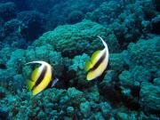 scuba02