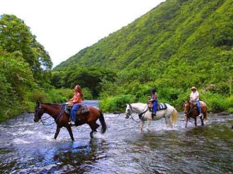 聖地ワイピオ渓谷観光/乗馬