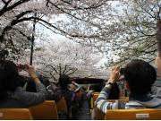 スカイバス・桜