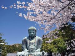 The Daibutsu Buddha in Kamakura in spring
