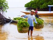 lembongan_mangrove-42