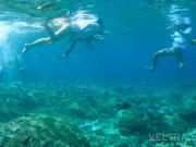 lembongan_mangrove-11