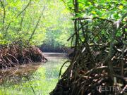 lembongan_mangrove-22