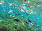 lembongan_mangrove-10