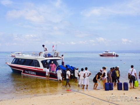lembongan_mangrove-48
