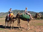 Atlas Camel Trek0-001