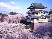 Japan Hirosaki Castle Sakura Cherry Blossoms