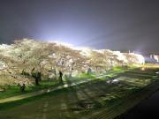 Japan Sakura Cherry Blossoms Kitakami Tenshochi