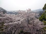 紀三井寺 大塔からの眺め3