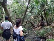 小笠原父島の森歩き1日05