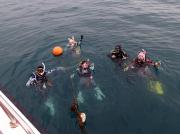 海で体験ダイビング07
